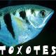 Toxotes